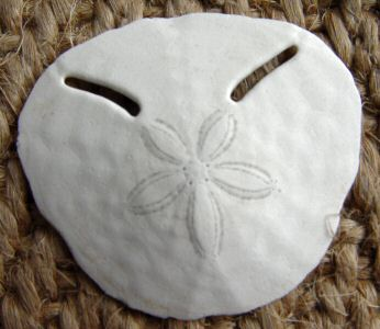 Pansy shell, front side